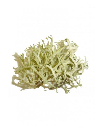 Consulenza Astrologia oraria